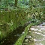 Jardines del Palacio da Pena en Sintra (Portugal)